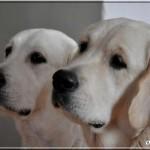 Tess & Elio 12 mois