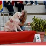 BIS 3 vétérante, expo de Golfe Juan, Chanelle 10 ans