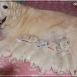 Paige (ruban rose) et ses 6 frères