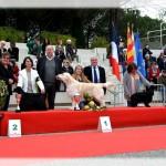 Expo de Golfe Juan 2017, 3 ans