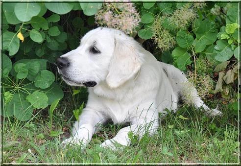Watson presque 5 mois 2
