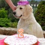 2 ème anniversaire