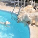 Tess (piscine), Lola , Cassidy, Elio et Chanelle