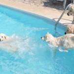 Lola , Tess, Cassidy (plongeon), Elio et Chanelle (rebord)