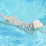 Tess barbote tranquillement dans la piscine