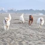 Lola, Paige , Lewis et Lou à Argelès sur Mer
