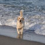 Lola à Argelès sur Mer