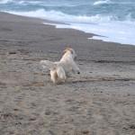 Paige à Argelès sur Mer