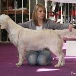 """Eternal For My Doll of Deep Dreamer's """"Tess"""", 1ère Excellent, Valence, mars 2011."""