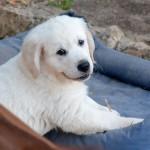 Piper 9 semaines