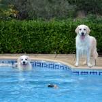 Cassidy et Lola