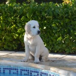 Piper, 4 mois