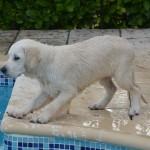 Piper, 3 mois
