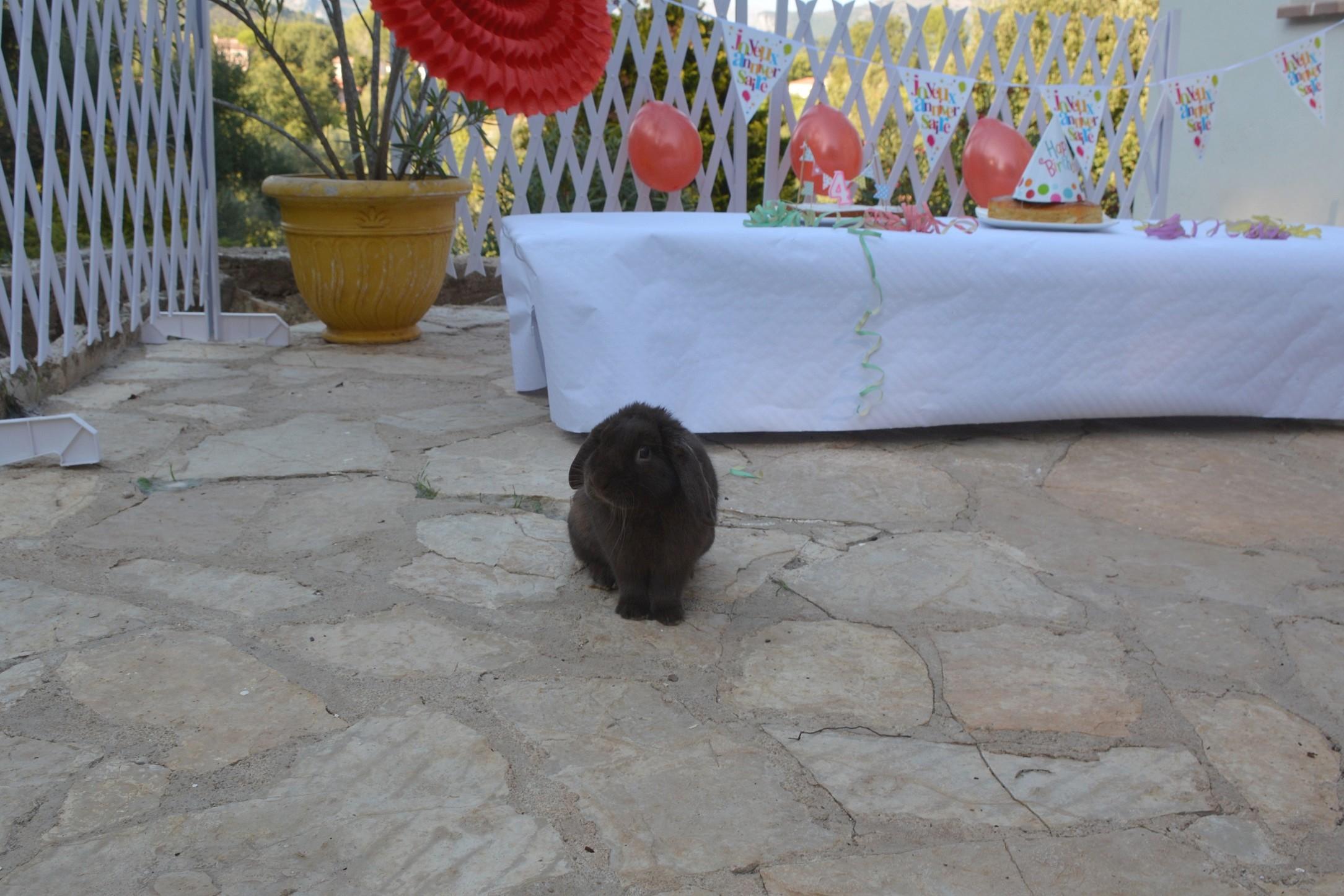 Easter anni 8 ois