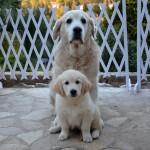 Lorel 11 semaine et son papa Elio