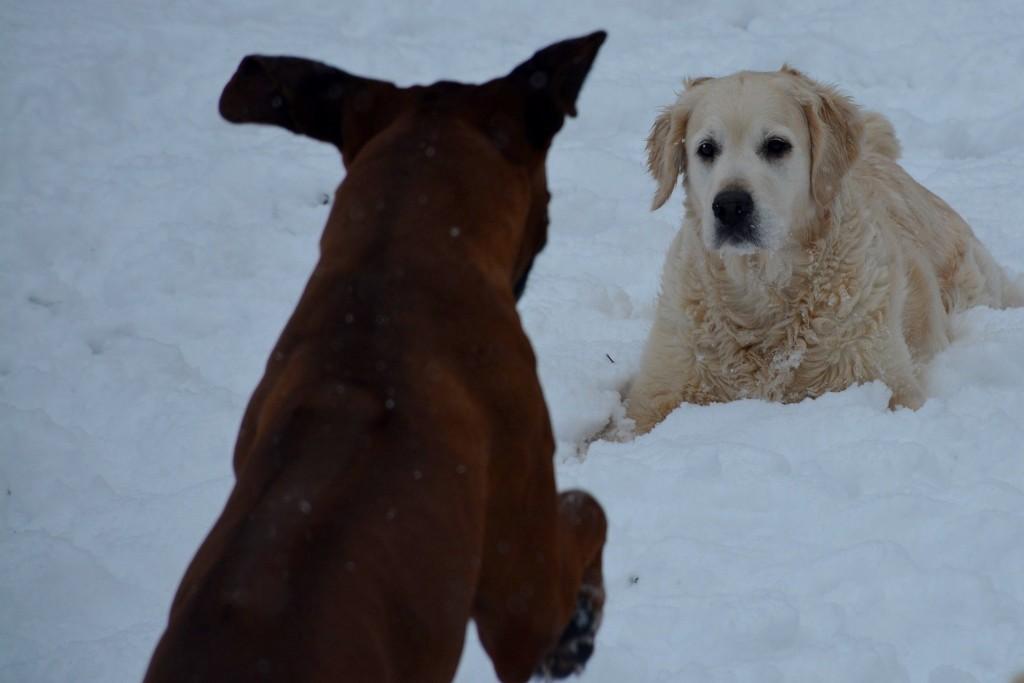 Lewis et paige neige jardin 1