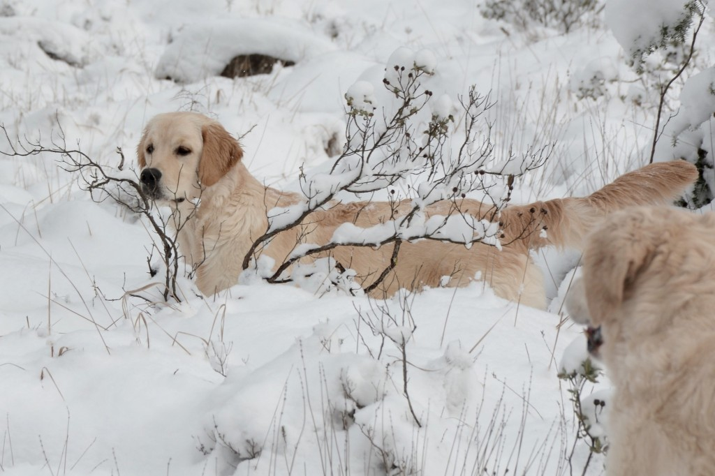 Lorel 6 mois  balade neige 2