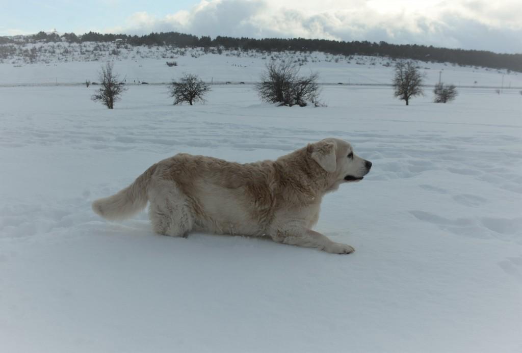 Elio neige 11 ans 4