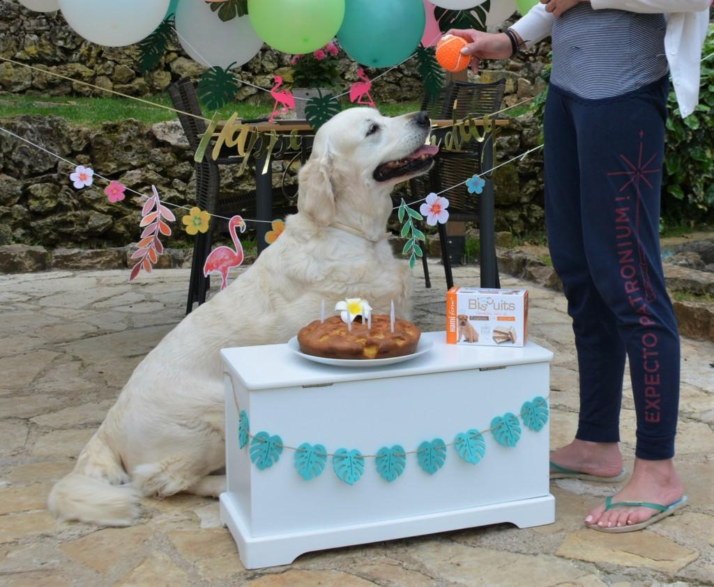 Piper anniversaire 11