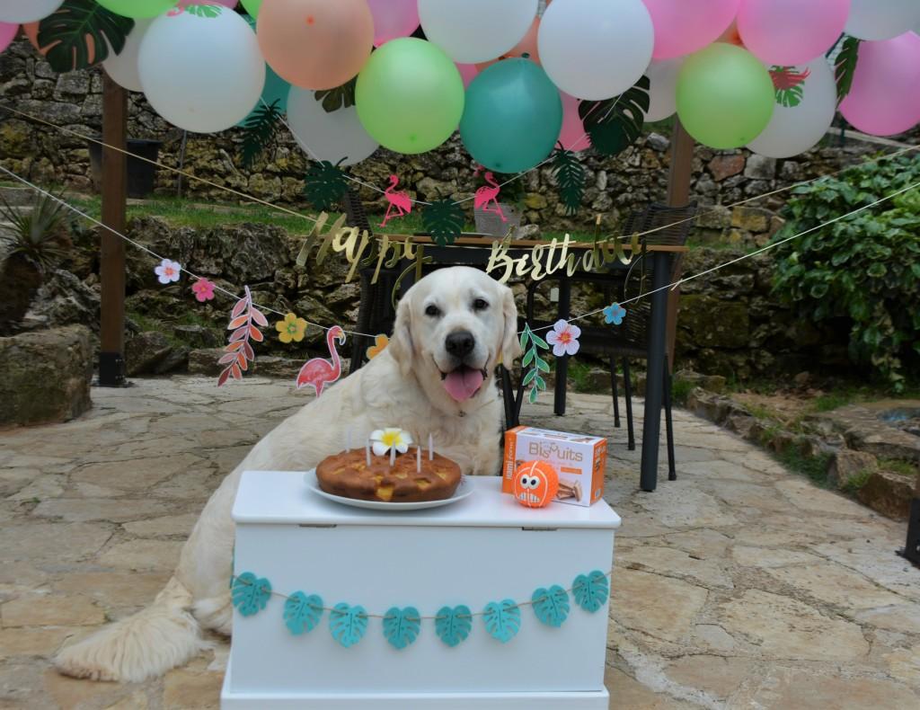 Piper anniversaire 2