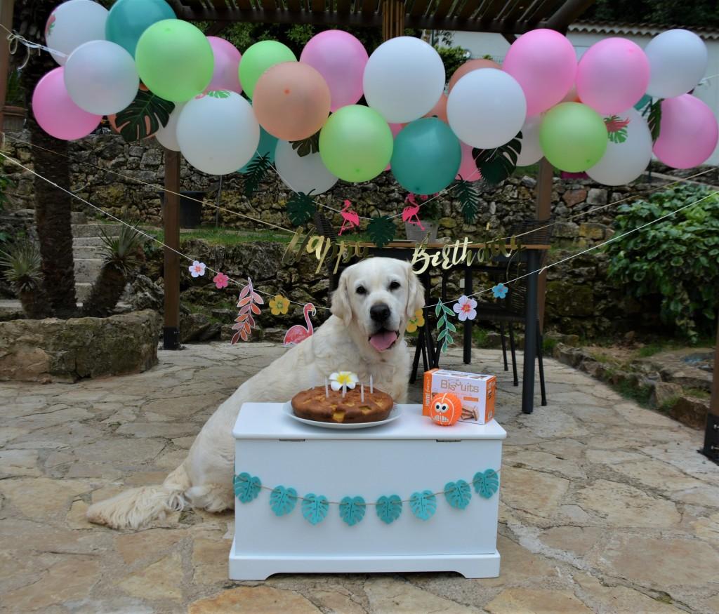 Piper anniversaire 5