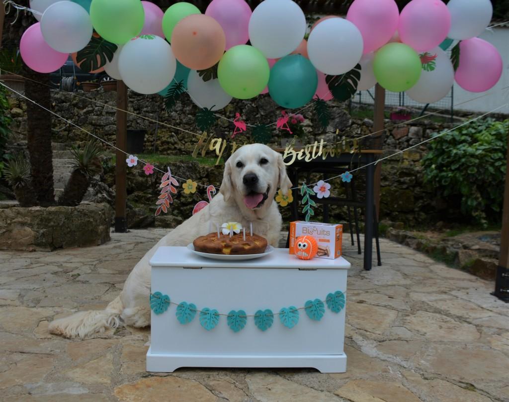 Piper anniversaire 6