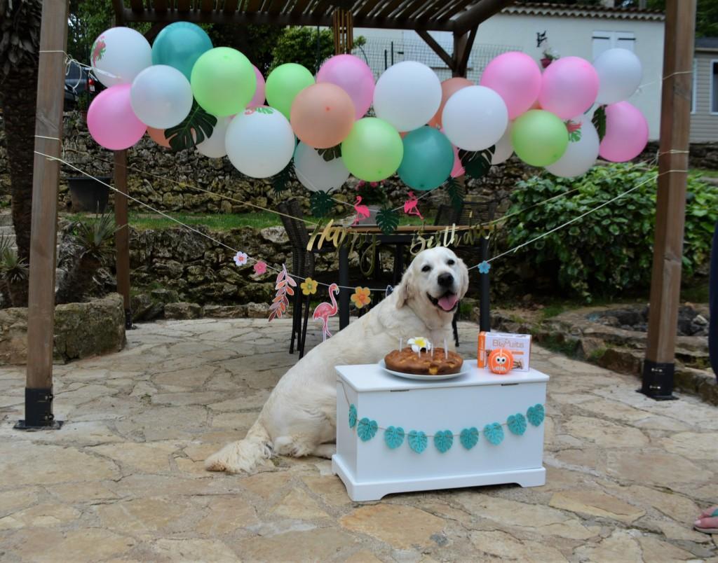 Piper anniversaire 8